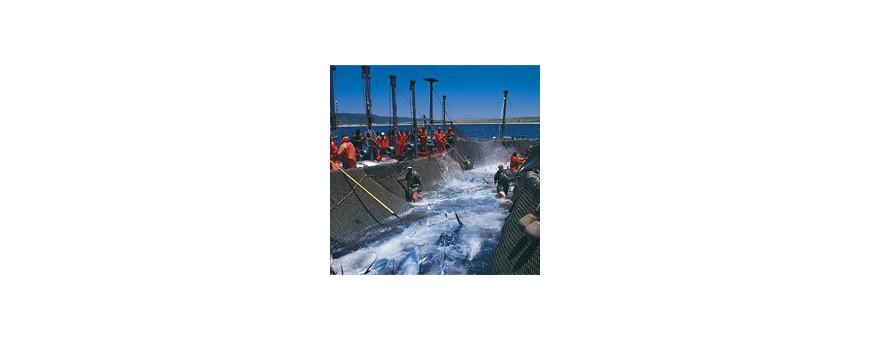 Productos del mar, fluviales y piscifactorías